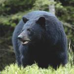 5-year-old descendant of Davy Crockett kills bear